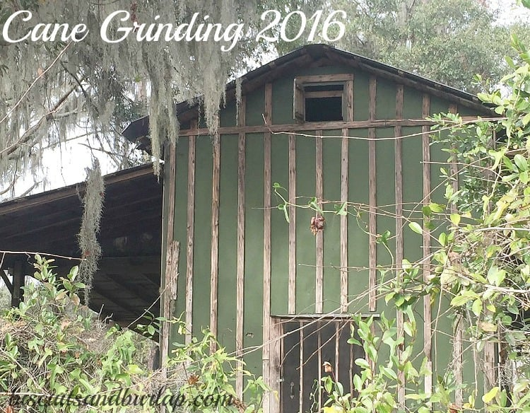 Cane Grinding 2016