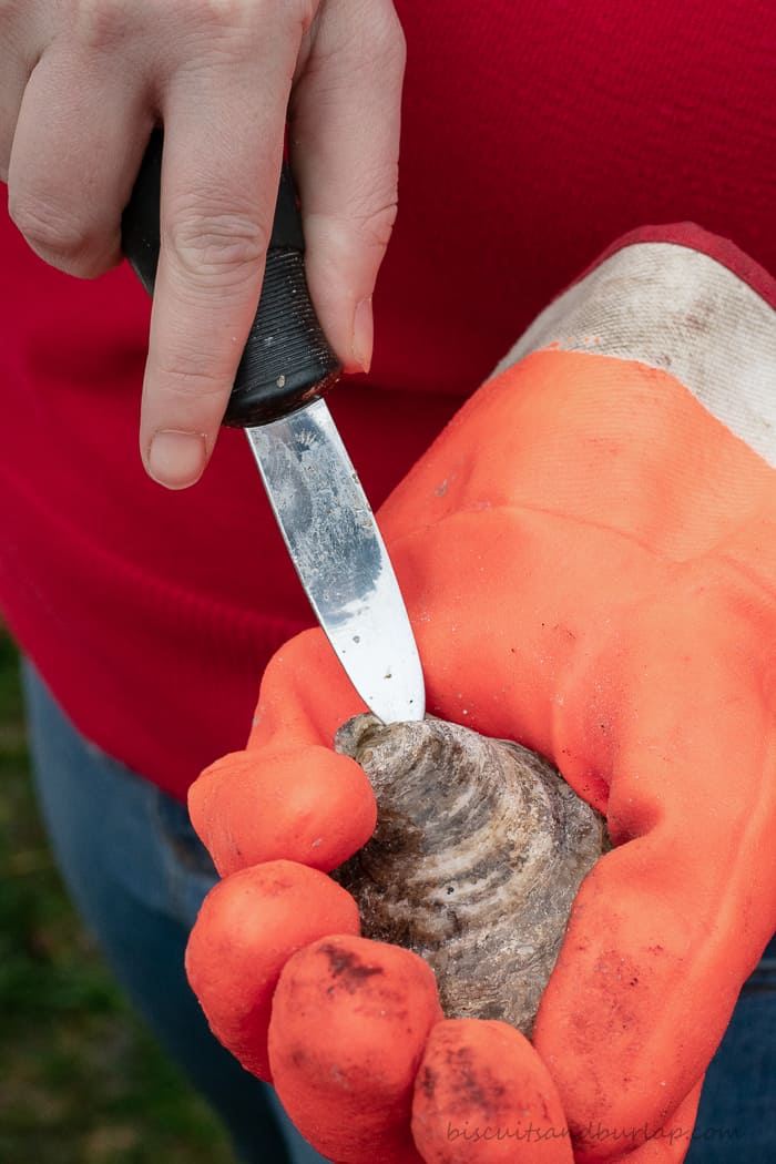 gloved hand opening oyster with oyster knife