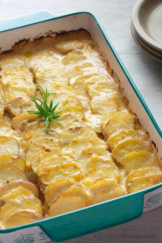 potato gratin with rosemary on top